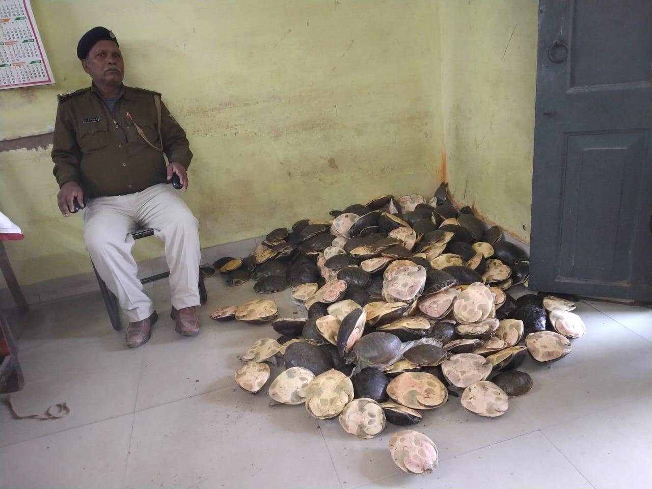 छपरा में ट्रेन से भारी संख्या में कछुए बरामद, बंगाल ले जा रहे थे तस्कर